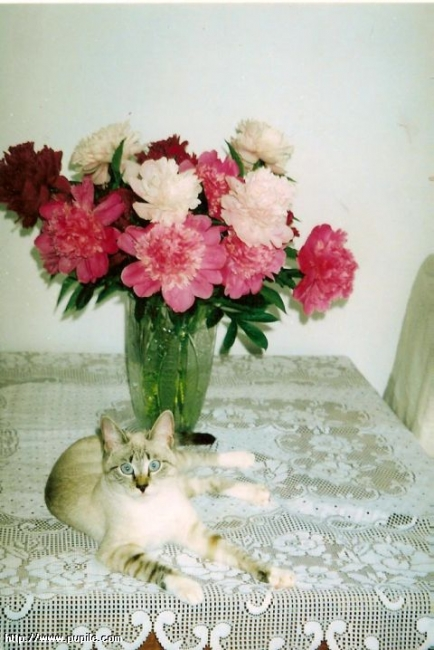 http://upload.miau.pl/3/44509.jpg
